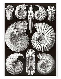 Ernst Haeckel - Ammonitida or extinct fossil ammonites