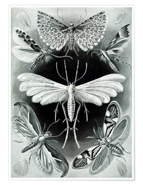 Premium poster  Plate of moths - Ernst Haeckel