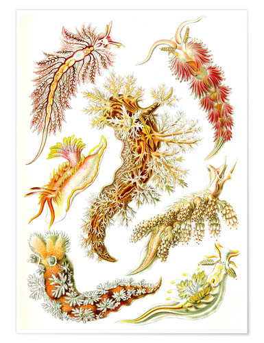 Premium poster Nudibranches, artistic forms of nature, design 43.