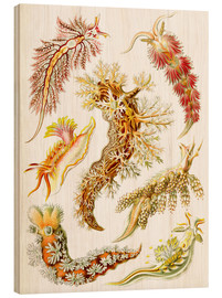 Wood print  Nudibranches, artistic forms of nature, design 43. - Ernst Haeckel