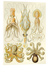 Acrylic print  Squid and octopi - Ernst Haeckel