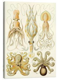 Canvas  Squid and octopi - Ernst Haeckel