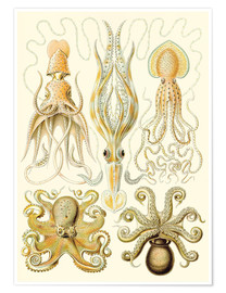 Premium poster Squid and octopi
