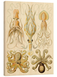 Wood print  Squid and octopi - Ernst Haeckel