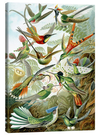 Canvas  Trochilidae hummingbirds - Ernst Haeckel