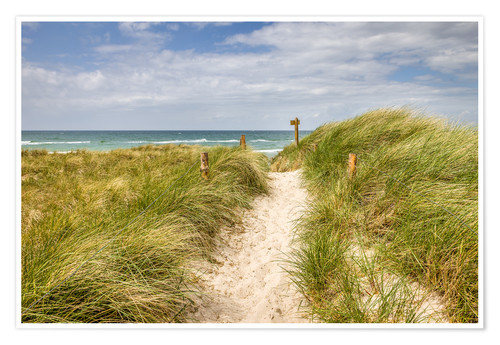 Premium poster Path in the dunes on the German Baltic Sea