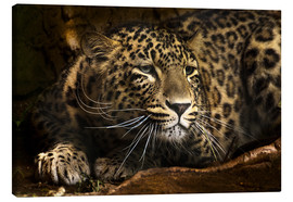 Canvas print  Leopard on the lookout - Edith Albuschat