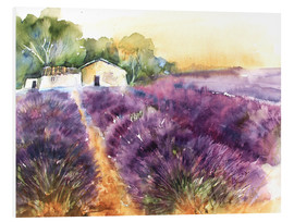 Forex  Lavender field in Provence - Eckard Funck