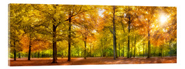 Acrylic print  Colorful autumn forest in sunlight - Jan Christopher Becke