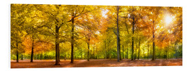Foam board print  Colorful autumn forest in sunlight - Jan Christopher Becke