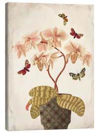 Canvas print  Orchid Portrait - Mandy Reinmuth