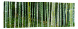 Acrylic print  Green bamboo forest in Kyoto, Japan - Jan Christopher Becke