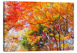 Canvas print  Colorful autumn leaves in the forest - Jan Christopher Becke