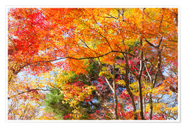 Premium poster  Colorful autumn leaves in the forest - Jan Christopher Becke