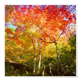 Premium poster Bright colors in the autumn forest
