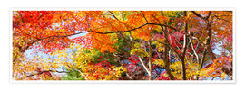 Premium poster Colorful forest in autumn as Panorama