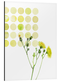 Aluminium print  Field Sowthistle in dots - Verbrugge Watercolor