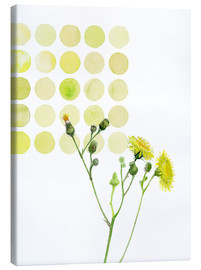 Canvas print  Field Sowthistle in dots - Verbrugge Watercolor