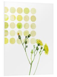 Foam board print  Field Sowthistle in dots - Verbrugge Watercolor