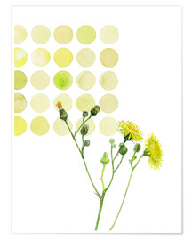 Premium poster  Field Sowthistle in dots - Verbrugge Watercolor