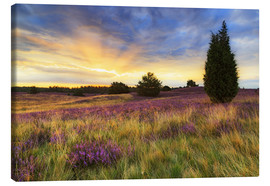 Canvas print  Sunrise in the Lüneburg Heath - Moqui, Daniela Beyer