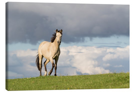 Canvas print  Horse in the summer in the meadow - Monika Leirich