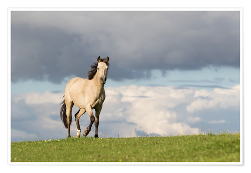 Premium poster Horse in the summer in the meadow