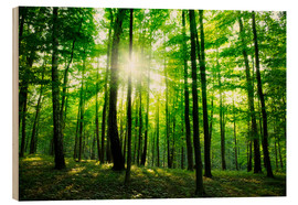 Wood print  Sunlight in the green forest, spring time