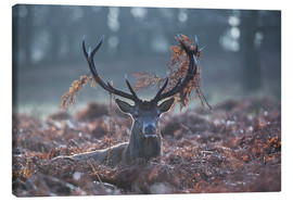 Canvas print  Deer stag in the brushwood - Alex Saberi