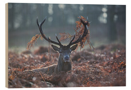 Wood print  Deer stag in the brushwood - Alex Saberi