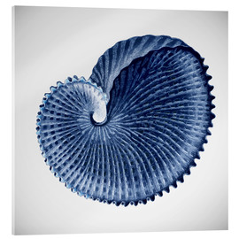 Acrylic glass  Seashell - Mandy Reinmuth