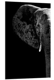 Foam board print  Portrait of an elephant - Philippe HUGONNARD