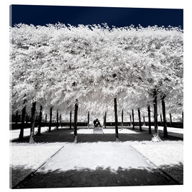 Acrylic print  Infrared rime in the park - Philippe HUGONNARD