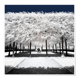 Premium poster  Infrared rime in the park - Philippe HUGONNARD