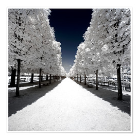 Premium poster  Infrared Park Walk in Paris - Philippe HUGONNARD