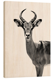 Wood print  Antelope on white - Philippe HUGONNARD