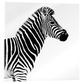 Acrylic glass  Safari Profile Collection - Zebra White Edition II - Philippe HUGONNARD
