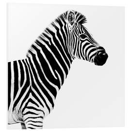 Foam board print  Zebra on white - Philippe HUGONNARD