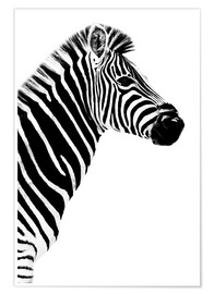 Poster Safari Profile Collection - Zebra White Edition III