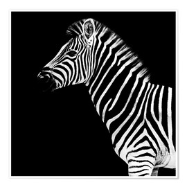 Premium poster  Zebra on black - Philippe HUGONNARD