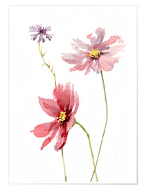 Premium poster Cosmos flower and cornflower