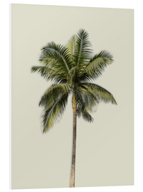 Foam board print  Palm tree - Alex Saberi