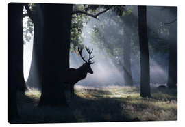 Canvas print  Stag in the morning light - Alex Saberi