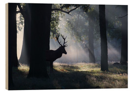 Wood  Stag in the morning light - Alex Saberi