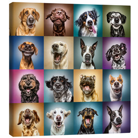 Canvas  Funny dog faces - Manuela Kulpa