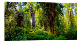 Acrylic print  New Zealand Waipoua Forest - Michael Rucker