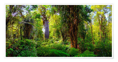 Premium poster New Zealand Waipoua Forest