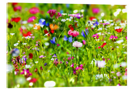 fotoping - Flower meadow