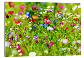 Alu-Dibond  Flower meadow - fotoping