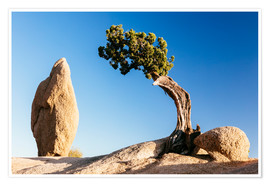 Premium poster The tree and the rock, Joshua tree national park, California, USA